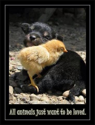 Animal Quotes, Animal Rights & Religions's photo: