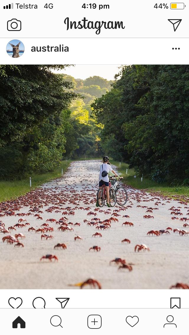 Christmas Island crab migration - happens towards the end of the year.
