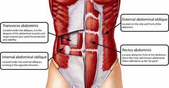 Unlike crunches, sit-ups,�cable woodchoppers,�ab v holds, hanging leg raises and the like, which primarily work the rectus abdominis (the vertical _six-pack_ muscles) and�obliques, planks blast the�transverse abdominis.