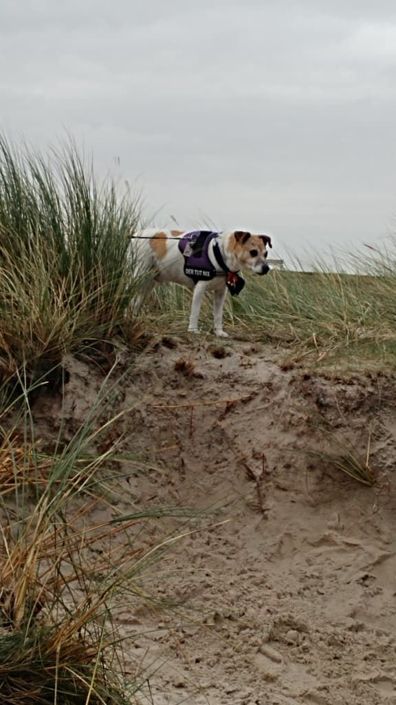 Hunde Foto: Marilena und Nicki - Nicki im Urlaub Hier Dein Bild hochladen: http://ichliebehunde.com/hund-des-tages  #hund #hunde #hundebild #hundebilder #dog #dogs #dogfun  #dogpic #dogpictures