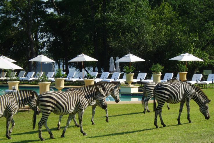 Experience the unexplanatory tales of Mana Pools! http://www.wunderbird.com/safari/rejser_til_zambia