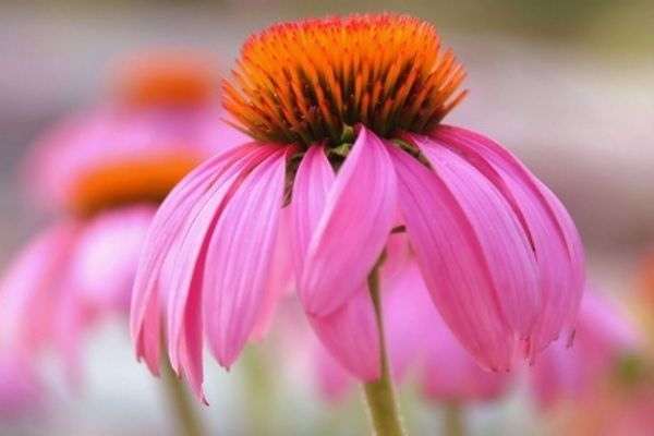 118 best images about tennessee native plants and flowers on pinterest