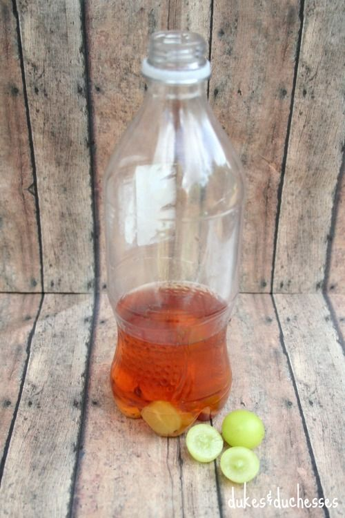 apple cider vinegar and grapes to catch fruit flies