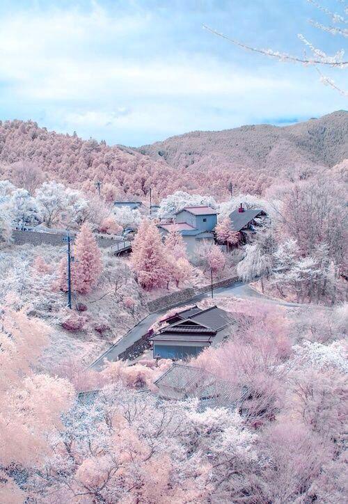 Flores de cerejeira em Monte Yoshino, Nara, Japão