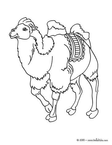 Bactrian Camel Coloring Page You Can Print Out This But Also Color Online All AFRICAN ANIMALS Pages