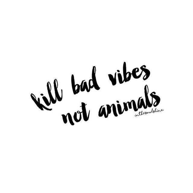 Vegan Quotes 94 Best Vegan Quotes Images On Pinterest  Vegan Quotes Vegan