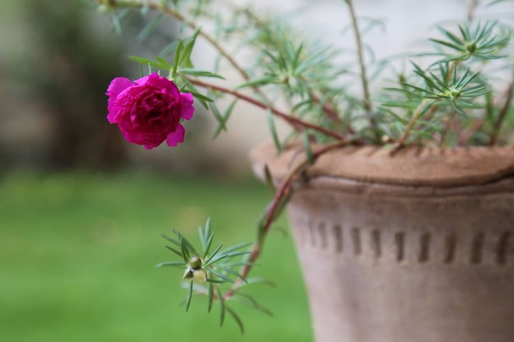 Gul Dopahri Flower https://www.youtube.com/watch?v=twP_E8zxMdc