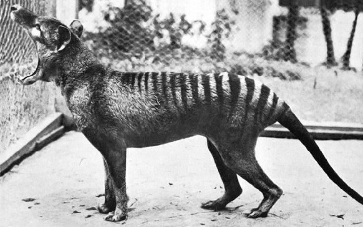 Voici les images de six espèces d'animaux disparues de la surface de la Terre, pour la première fois réunies en vidéo.