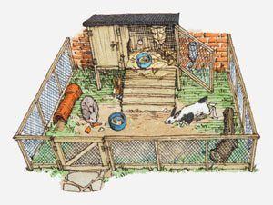 DIY Rabbit Hutch   rabbit hutch provides a safe environment for pet rabbits. Mentioned ...