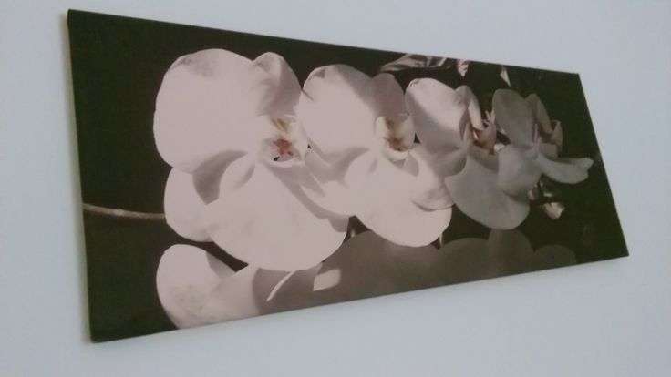 I took a photo of my mom's orchids and ordered a canvas picture of it.