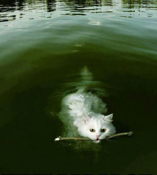 A nadar!