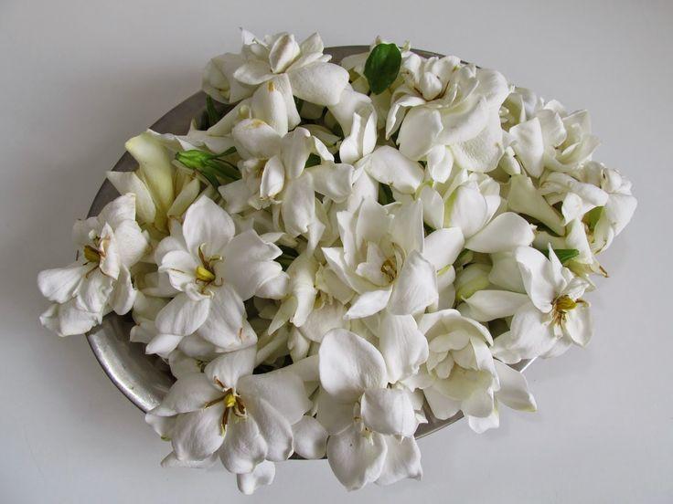 .: Flores comestíveis: Gardênia faz geléia perfumada                                                                                                                                                                                 Mais
