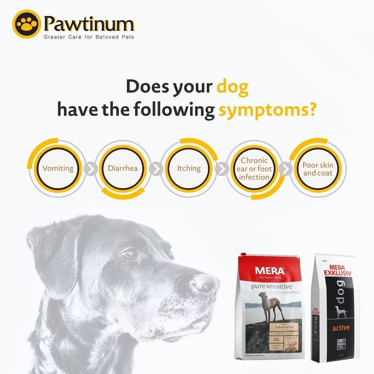 Dog food recipes dog food recipes skin infection dogs