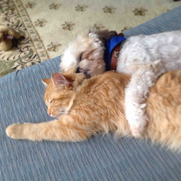 A month ago we adopted a sick kitten. Our dog helped nurse him back to health, and this is them now. picture