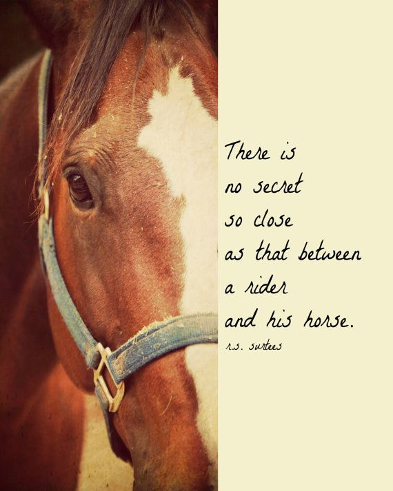 human horse relationship quotes