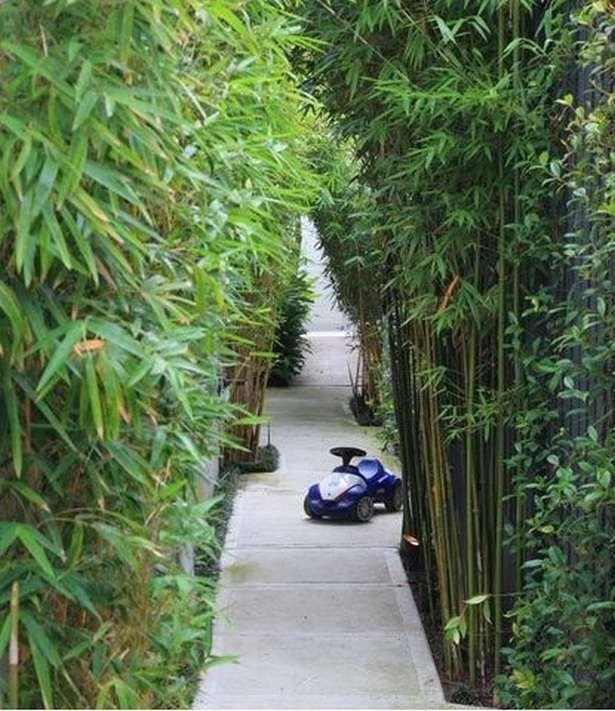 Bamboo Garden Ideas Backyards 16 Bamboo Garden Backyard Garden Bamboo Landscape