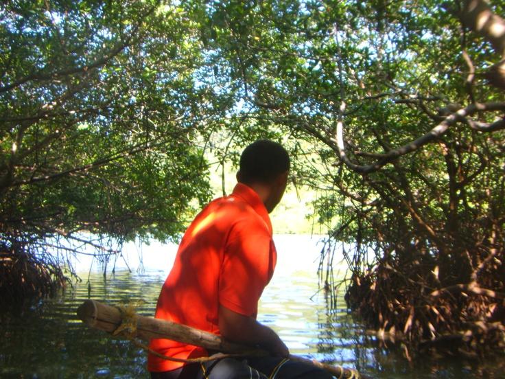 Mangrove@Parque Tayrona #travel #Colombia