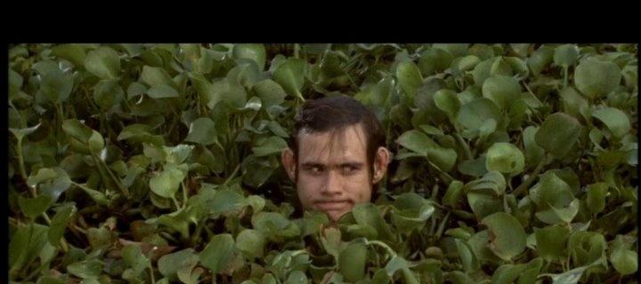 1000+ images about Ace Ventura on Pinterest | Jim carey ...