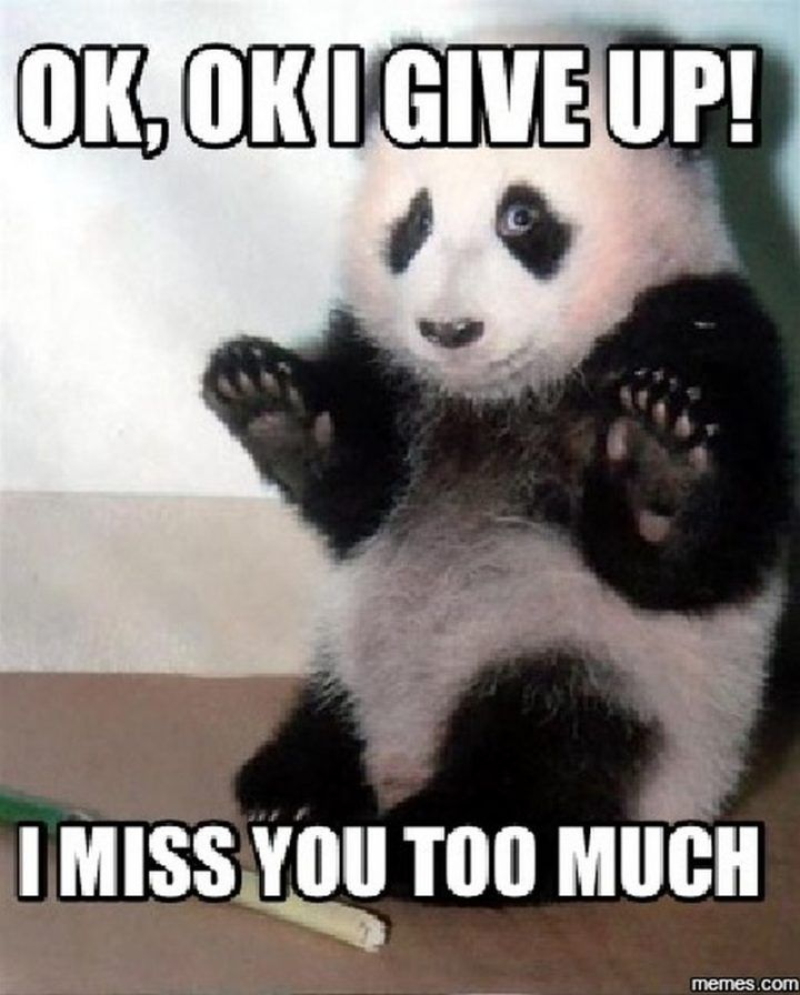I Miss You Too Meme : Sincere, Memes, Share, People, Panda, Bear,, Funny, Animal, Pictures,, Quotes