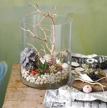 .Shells, Kids Activities, Plants, Dishes Gardens, Cote De Texas, At The Beach, Summer Shrimp, White Marbles Kitchens, Beach Inspiration