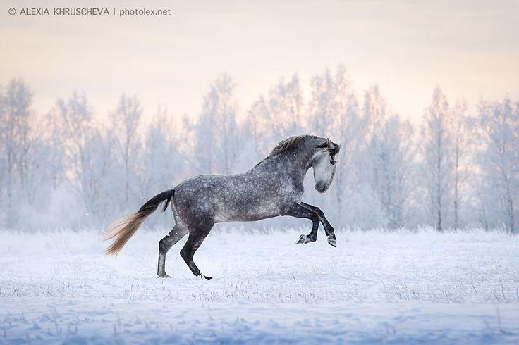 Автор: Alexia Khruscheva