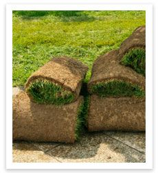 Turf Rolls by J & B Buffalo Turf Supplies - http://www.buffaloturf.com.au.