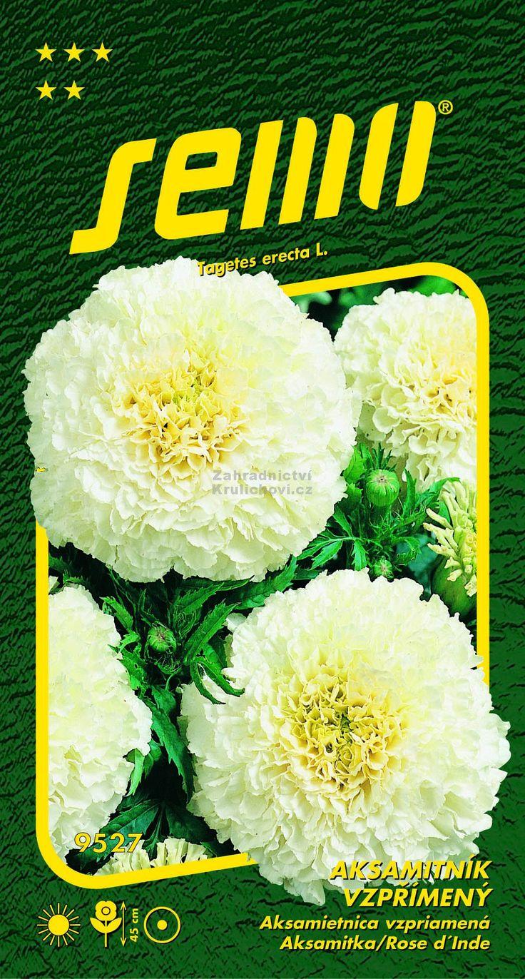 """Aksamitník vzpřímený,afrikán """"Kilimanjaro White"""" Zahradnictví Krulichovi - zahradnictví, květinářství, trvalky, skalničky, bylinky a koření"""