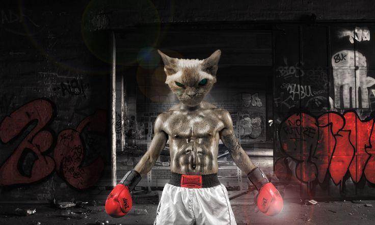 #noalmaltratoanimal  O si no les presento un lindo gatito :)