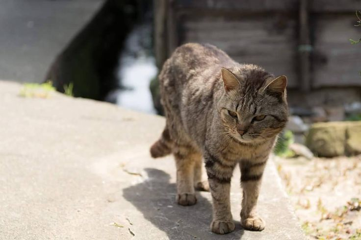 道で出会ったネコをとりあえず撮ってみた  なかなか接近できないからどうしても中望遠域で撮影することになる  もっと寄って広角気味に撮れれば被写界深度稼げるのに D7100で撮影  #動物#猫#ネコ#cat#ねこ#animal#カメラ#一眼レフ#写真#フォトグラファー#photographers#スナップ#風景#nikon#ニコン#d7100#佐久島 by kakeru_artigiano_di_rana http://www.australiaunwrapped.com/