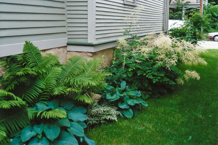 Landscaping With Ferns : Fern and hosta for side yard gardens