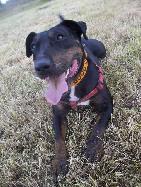 Medford Oregon Dogs For Adoption