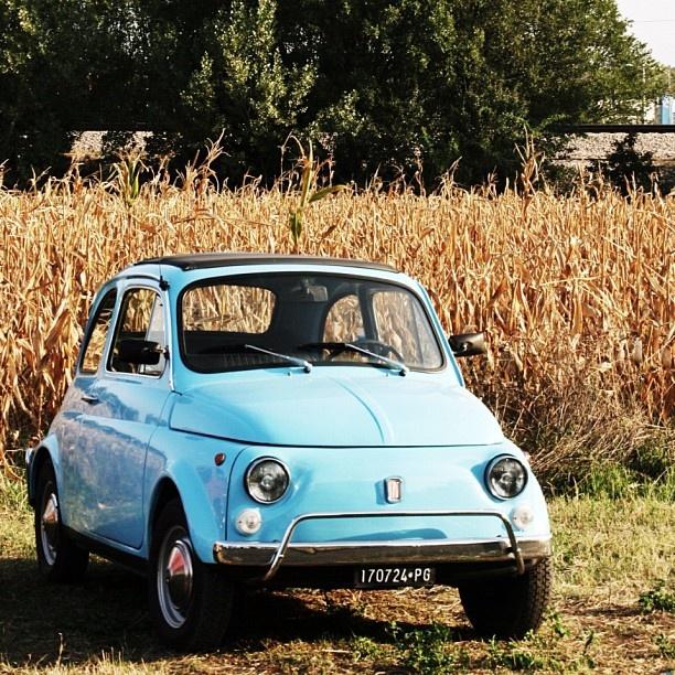 A beautiful portrait of a Fiat 500