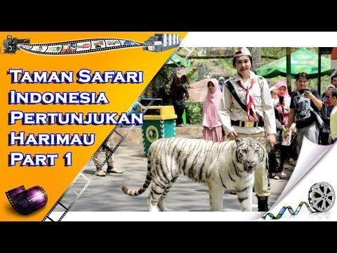 Taman Safari Indonesia Pertunjukan Harimau - Part 1