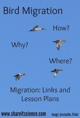 Share it! Science News : See it? Share it! Bird Migration 2