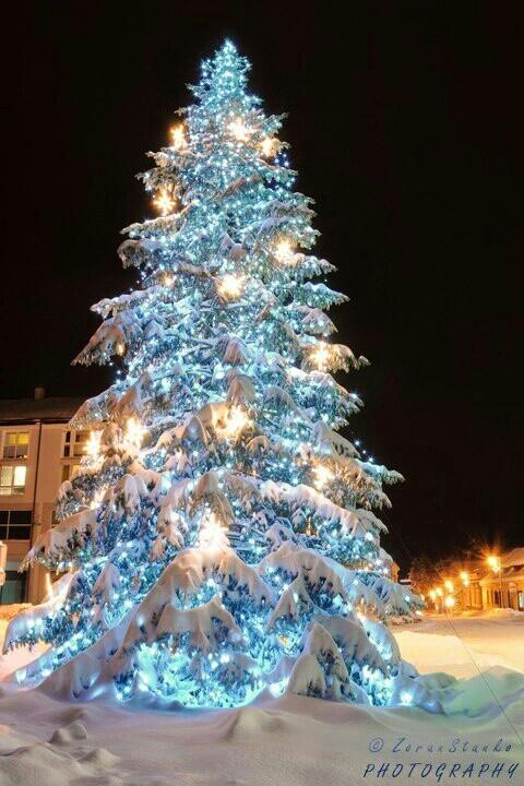 Xmas tree...lights ....snow....night...beautifull..croatia