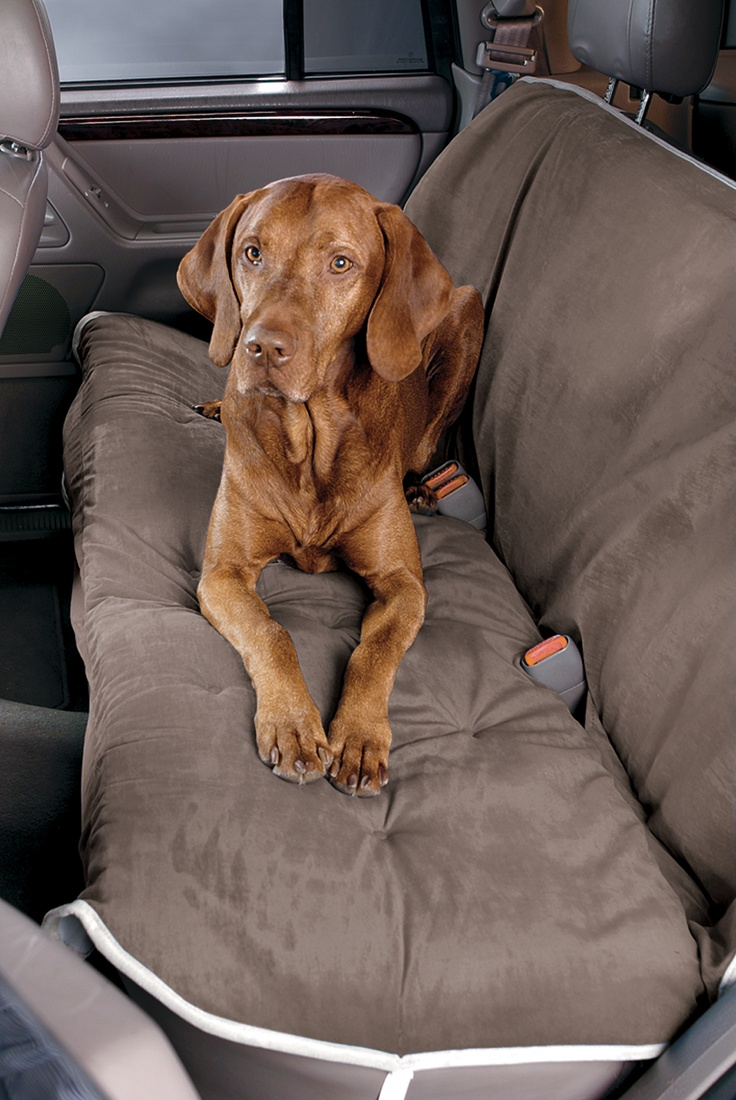 keep your dog with you and your car clean!   http://www.bigwags.com/collections/dog-car-and-air-travel-safety