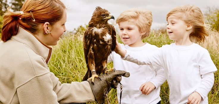 Pet and play with rare birds at Eagle Encounters (a rehabilitation, conservation and eco-education zone at the Spier Wine Estate in Stellenbosch)