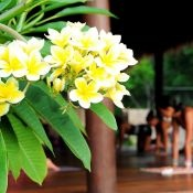 Maybe a yoga class amidst plumeria filled breezes.