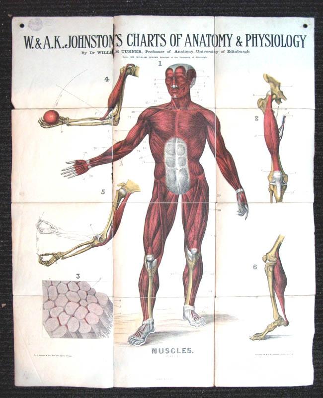 30 best Medical images on Pinterest | Med school, Medical and Artist