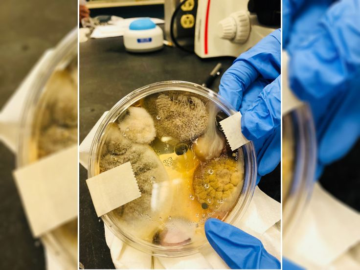 Pic of bacteria from bathroom hand dryer air goes viral
