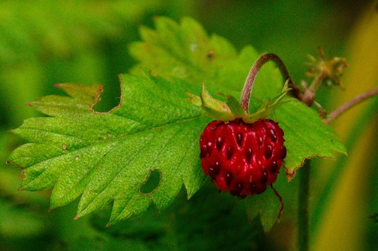 strawberry by Paul Photospec on 500px