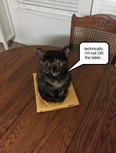 plantigrade stance cat