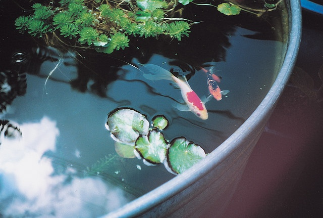 23 best images about pond design on pinterest one fish for Artificial koi fish for ponds