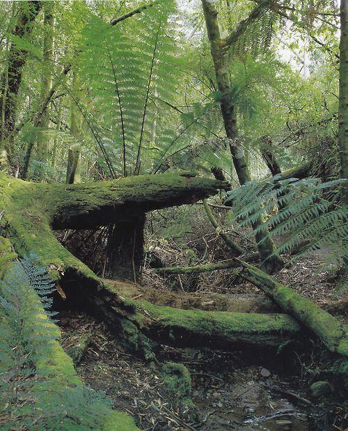 Grampians National Park, 1985