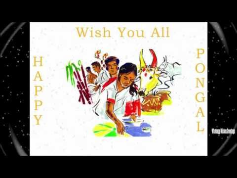 Happy pongal 2016 SMS | Happy pongal 2016 Latest Wishes/SMS/Greetings,Wh...