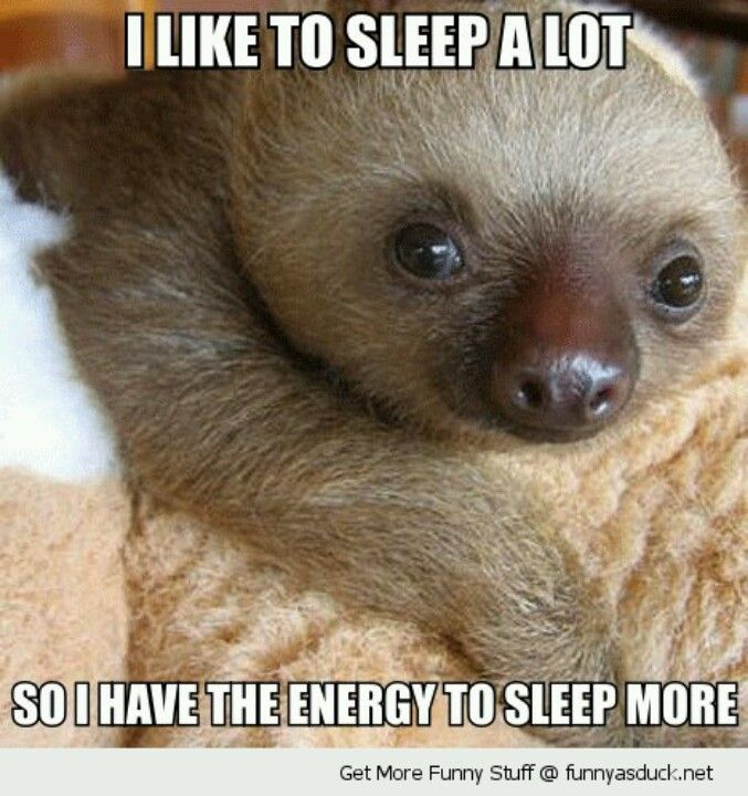 Cute Quote w/ Adorable Baby Sloth – Why I Sleep a Lot