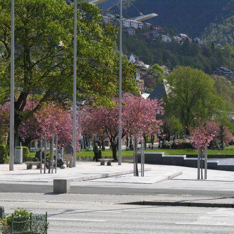 Festplassen - Arkitektgruppen Cubus