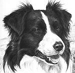 Da ich häufig Hunde zeichne bekomme ich öfter Anfragen wie man Haare oder Fell zeichnet. Diese anscheinend einfache Übung ist in Wahrheit eine schwierige Aufgabenstellung. Da jeder Künstler seine eigene Art und Weise hat dieses Problem zu lösen, kann ich Ihnen nur meinen Weg zeigen, bzw. die Techniken zeigen die ich meist verwende, aber nicht alles wird in diesen Artikel passen. Weiterlesen →