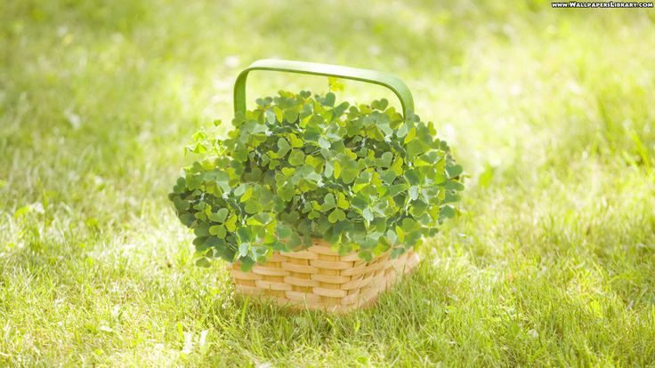 High Definition Basket With Clover Wallpaper