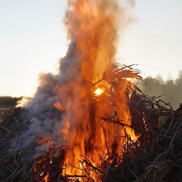 Another shot from my early morning pile burn / bonfire. 🔥 ~ #pileburn #bonfire #Country_features #tv__rural #tv_lovelylanes #renegade_rural #the_home_front #farmsofinstagram #trb_rural #pocket_farms #countrylifestyle1 #splendid_outskirts #tv_charmingfences #ig_rural #dream_image #special_shots #magicpict #exklusive_shot #Main_Vision #Greatshotz #jaw_dropping_shots #allshots_ #ig_shotz #theworldshotz #photoarena #igworldclub #global_hotshotz #awe_inspiringshots #universal_shotz…
